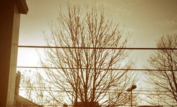 Tree Preservation Order_West Hampstead overground_ft