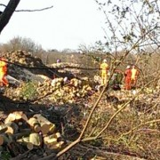 Trees_felled_WestHampsteadSquare_ft