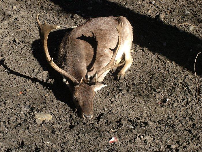 11_deer park