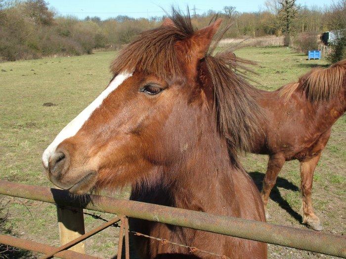 6_Horse