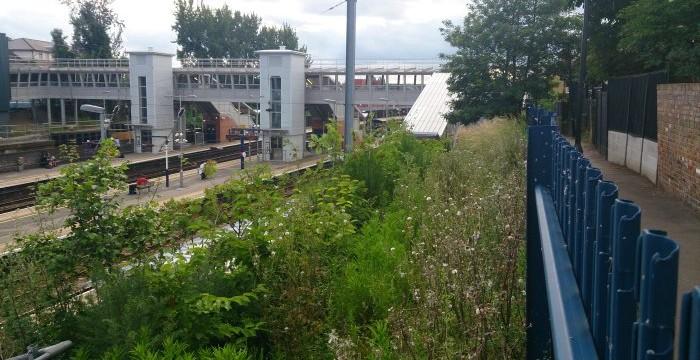 Thameslink_foliage