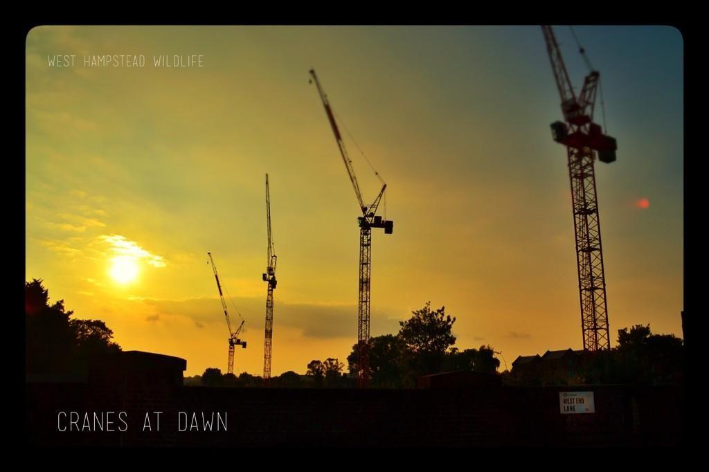 West Hampstead sunset