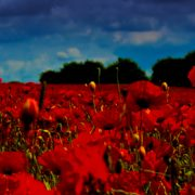 westhampsteadpoppyfield_ft