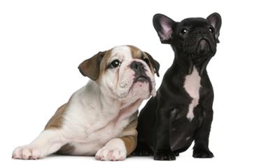 wag-club-dogs