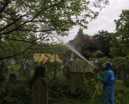 Processionary Oak Moth discovered in Hampstead Cemetery.  Who ya gonna call? Mothbusters.